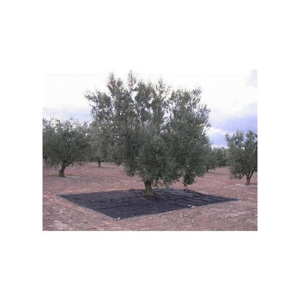 Malla almendra-oliva