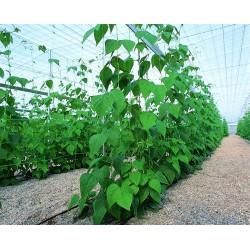Malla soporte de plantas vertical