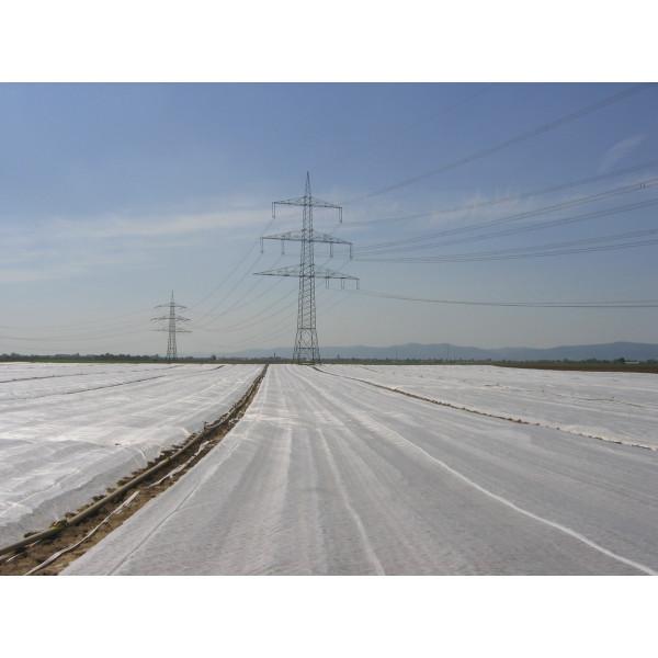 Manta térmica agrícola Rollos 250m