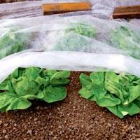 Mantas térmicas agrícolas