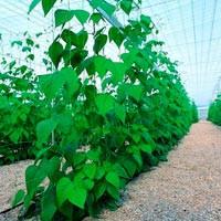 Mallas soporte de plantas
