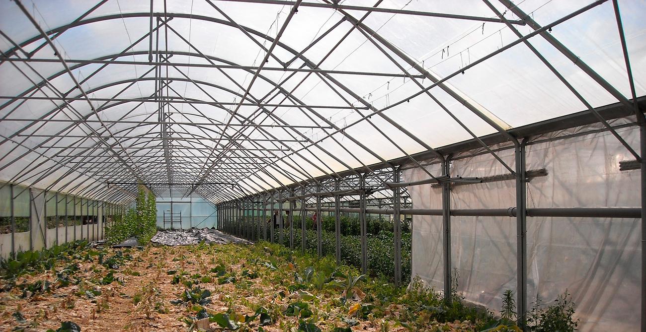 Plástico para invernaderos